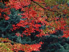 栃木県 鬼怒川温泉の画像